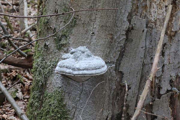 Fungus by PatrickElsender