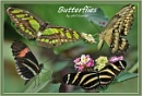 Butterflies by PhilT2