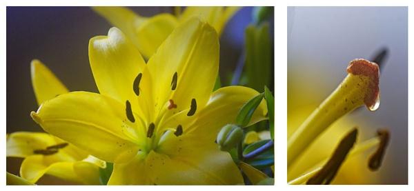 Café lily by bobby55
