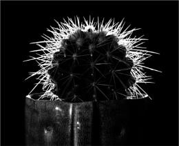 Photo : Cactus, backlit