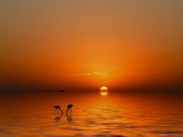 Flamingos in sunset