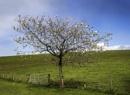 Lone Tree - Scottish Style by Irishkate