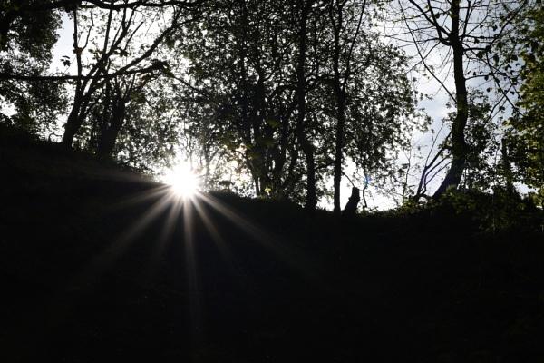 Sun Flare by ShaunsPics