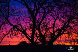 Tree Sunset Silhouette in N.Ireland
