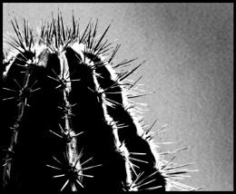 Photo : Spines