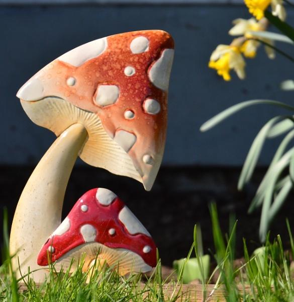 Mushroom  a  la  Ceramic by tonyguitar