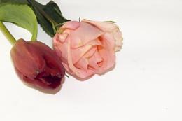 rose with tulip