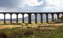 Ribblehead Sunshine by Trevhas