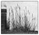 Grass with Shadows by taggart