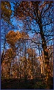 autumnal forest by estonian