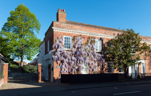 Wisteria at 161 High St by NevJB