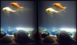 Three-D Goldfish