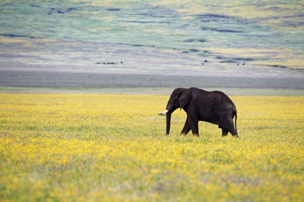 Spring in Ngoringoro, Tanzania by Zeevkirshenboim
