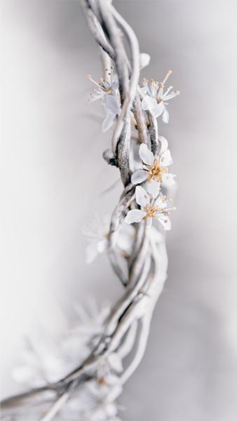...white spring by krisstina