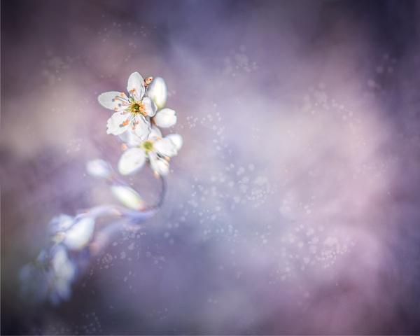 ...blossom by krisstina