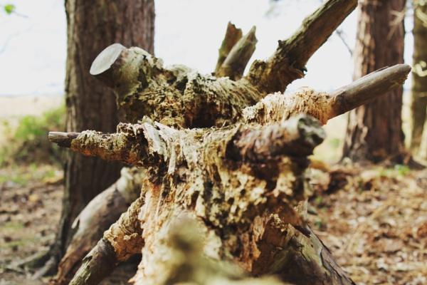 Fallen tree by tomchandler95