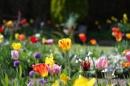 Spring by EeyoresFriends
