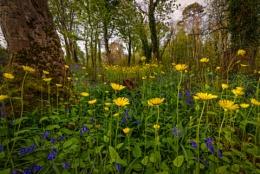 Woodland Magic
