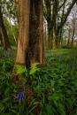 The Lush Woodland by douglasR