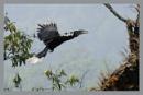 Rufous neck F in Flight by prabhusinha