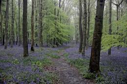 Photo : Ashridge in the rain