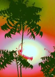 """"""" THE SUN """""""