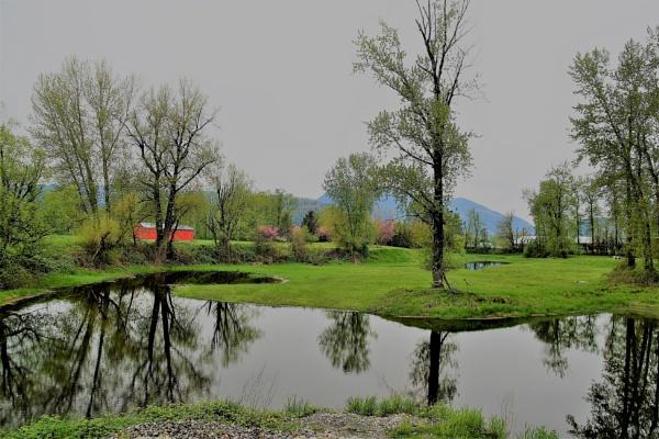 Peaceful  Reflection by Friendlyguy