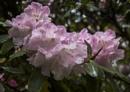 Blossom by Irishkate