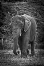 Elephant by mohikan22
