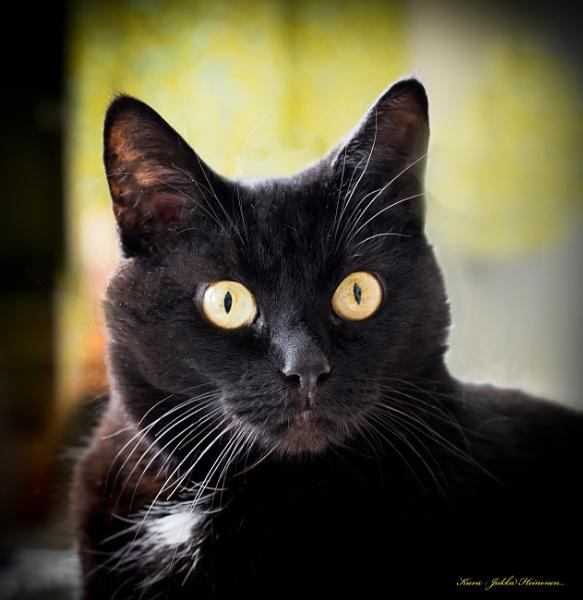 Musta Kissa. by kuvailija