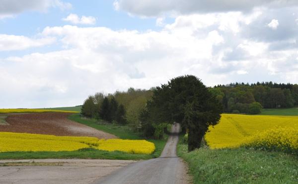 The track by Captsaigon