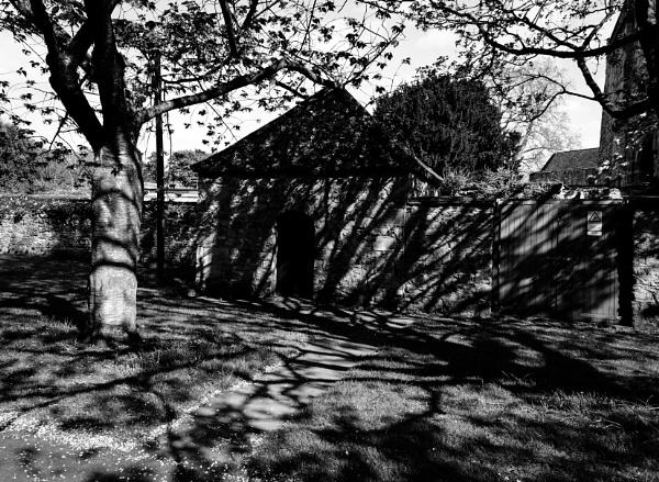 Shadows of Trees by Nikonuser1
