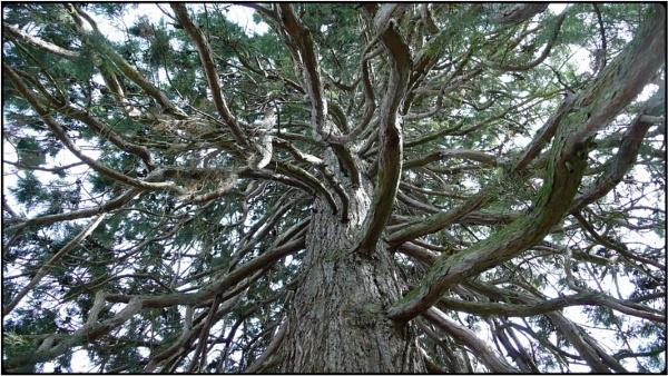 sequoia 2 by FabioKeiner
