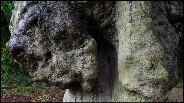 bullhead tree by FabioKeiner