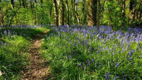 Woodland Blues by Alffoto