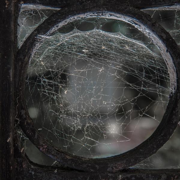 Cobweb by jacomes