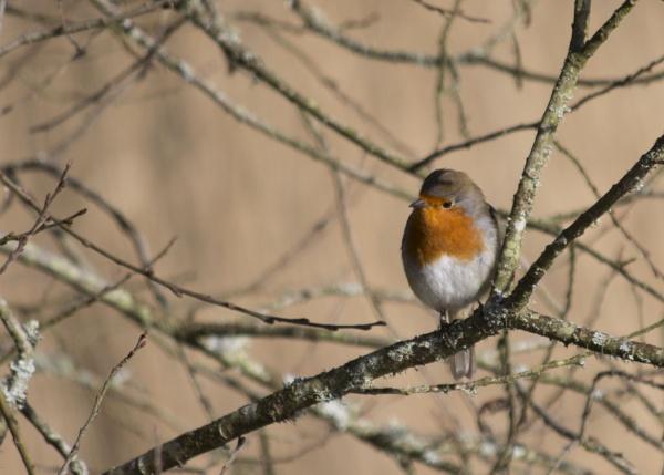 Robin by CanonRebecca22