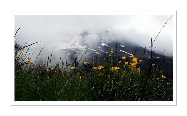Alpine Spring 3 by dukes_jewel