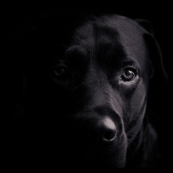 Marley Dog by repooc