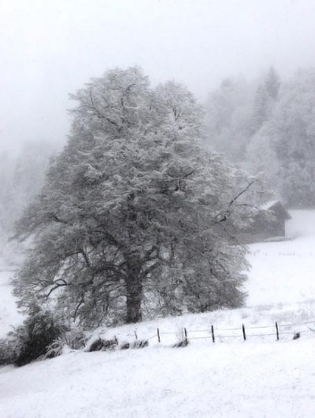 Welcoming Spring In Bavaria