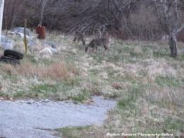 2 deers