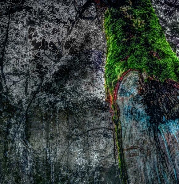 tree by Danas