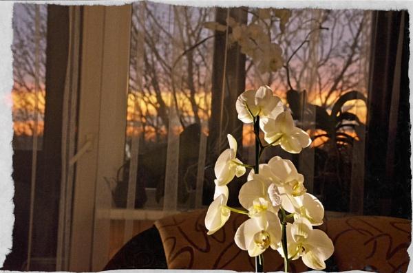 Evening by Zenonas