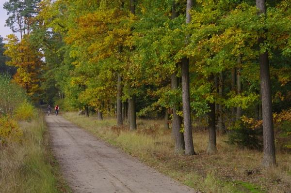 Autumnal Gleam Series #77 by PentaxBro