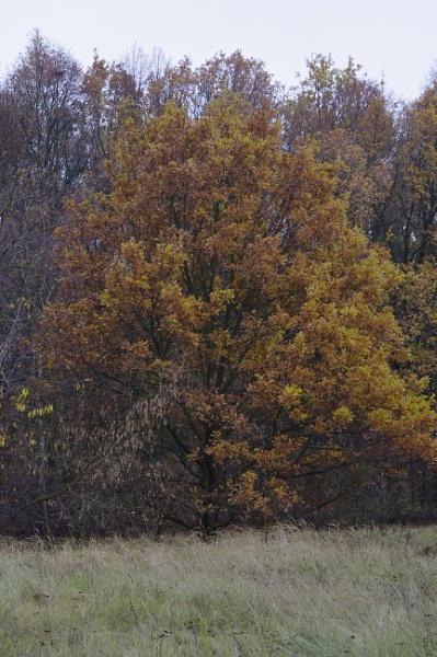 Frosty Autumnal Tree by PentaxBro