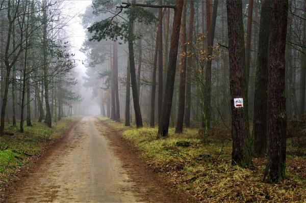 Forest Biking by PentaxBro