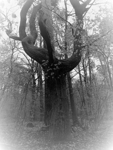 SpOOky Forest by PentaxBro