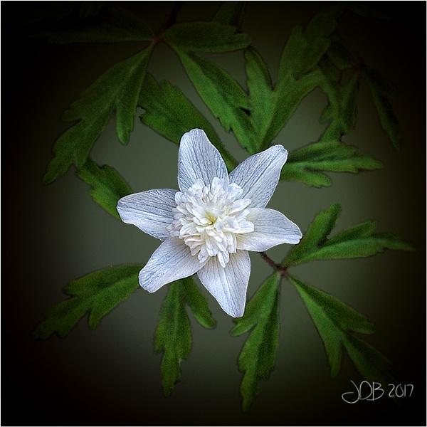 Anemone by Big_Beavis
