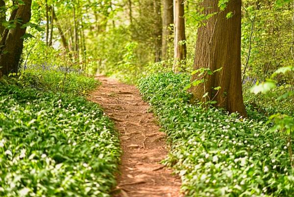 garlic woods by Steelpins