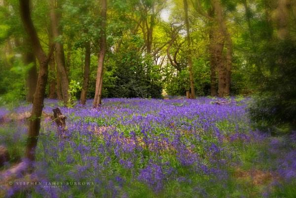 Jones Wood by Stephen_B